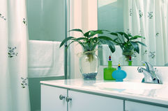 Bathroom with plant Royalty Free Stock Images