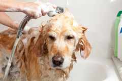 Bathroom to a dog Royalty Free Stock Photography