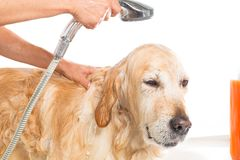 Bathroom to a dog Stock Images