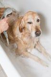 Bathroom to a dog Royalty Free Stock Photos