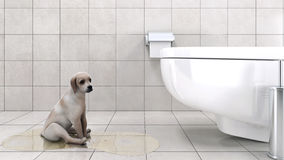 Bathroom With Dog Royalty Free Stock Photo