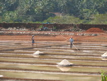 Salt salt extraction food industry India Royalty Free Stock Photos