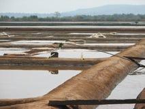 Salt salt extraction food industry India Stock Image