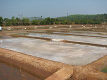 Salt salt extraction food industry India. Baths with salt salt extraction food industry India, Karnataka, Gokarna, March, 2017 royalty free stock images
