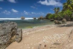 Bathsheba海滩巴巴多斯印度西部 免版税图库摄影