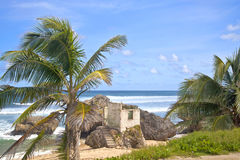 Bathsheba. Abandoned derelict cement building on a stretch of Bathsheba Beach, Barbados Royalty Free Stock Photos