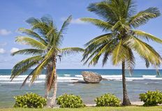Bathsheba Stock Photos