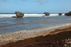 Bathsheba, Barbade Photos stock