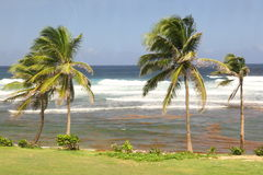 Bathsheba, Barbade Photographie stock libre de droits