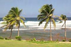 Bathsheba, Barbade Photographie stock libre de droits