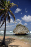 Bathsheba, Barbados. Tree and boulder at a popular beach in Barbados Stock Image