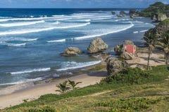 Bathsheba Barbados Immagini Stock