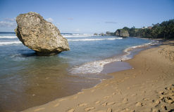 Bathsheba Barbados Stock Foto