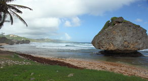 Bathsheba, Barbados Royalty Free Stock Image