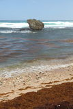 Bathsheba, Barbados Stock Image