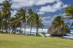 Bathsheba Barbados West Indies Stock Afbeelding