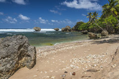 Bathsheba beach Barbados West Indies Royalty Free Stock Photography
