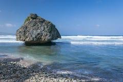 Bathsheba coral reef boulder Stock Images