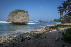 Bathsheba coral reef boulders Stock Image