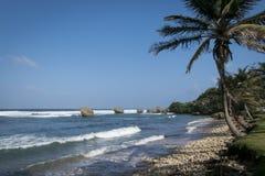 Bathsheba coral reef boulders Royalty Free Stock Images
