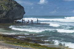 Bathsheba Pools, Barbados, le Antille Fotografia Stock