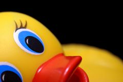 Bathtime. Rubber bath duck with funny expression Stock Photos