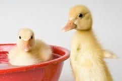 Bathtime alla Camera Ducky Fotografia Stock Libera da Diritti