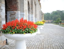 Bathtub of red flower beside the big wall Stock Image