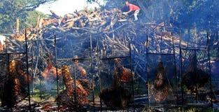 Bathurst oxeBraai (grillfest) östlig udde - Sydafrika Royaltyfri Fotografi