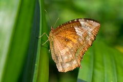 Batik butterfly on the green background Stock Photography