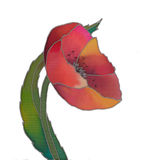 Batik tulip isolated Stock Images
