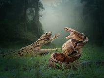 Batle de serpent, de crocodile et de la grenouille images stock