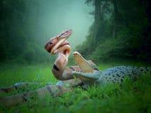 Batle og dnake en krokodil royalty-vrije stock afbeelding