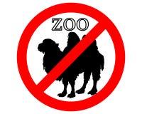 Batrian camel in zoo prohibited Royalty Free Stock Photos