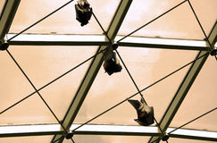 Bats. Couple of bats hanging on ceiling stock photography