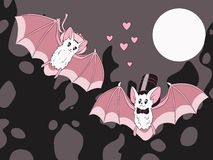 Bats Stock Photos