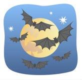 Bats Stock Photos