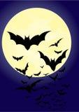 Bats Stock Photography