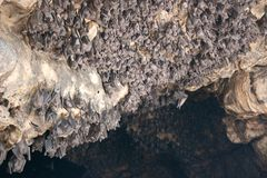 Bats in cave Stock Images
