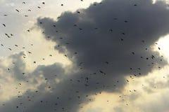 Bats and clouds Stock Photos