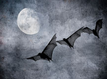 Bats in the dark cloudy sky, halloween background Stock Images
