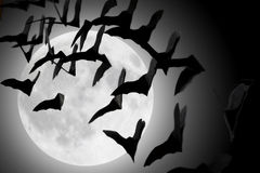 Bats fluttering. Silhouettes of bats in the clouds during the full moon stock images