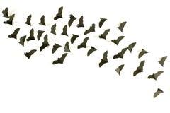 Bats fluttering Stock Photo