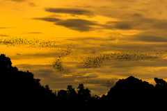 The bats fly out in the evening. Royalty Free Stock Photography