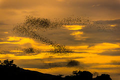 The bats fly out in the evening. Stock Photo