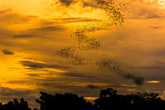 The bats fly out in the evening. Royalty Free Stock Photo