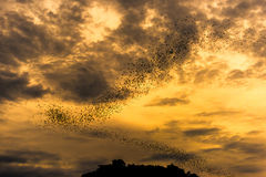 The bats fly out in the evening. Royalty Free Stock Photos