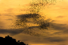 The bats fly out in the evening. Stock Images