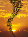 Bats flying againt sun. And golden sky may use for horrible theme or halloween theme Royalty Free Stock Photography