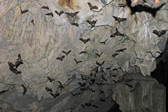 Bats flying in Lanquin Cave, Guatemala
